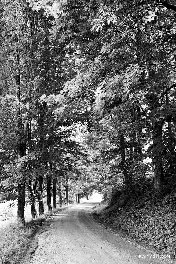COUNTRY ROAD AND MAPLE TREES VERMONT BLACK AND WHITE