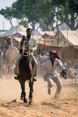 A rider performs on a galloping horse at the Pushkar Camel Mela, Pushkar, India.