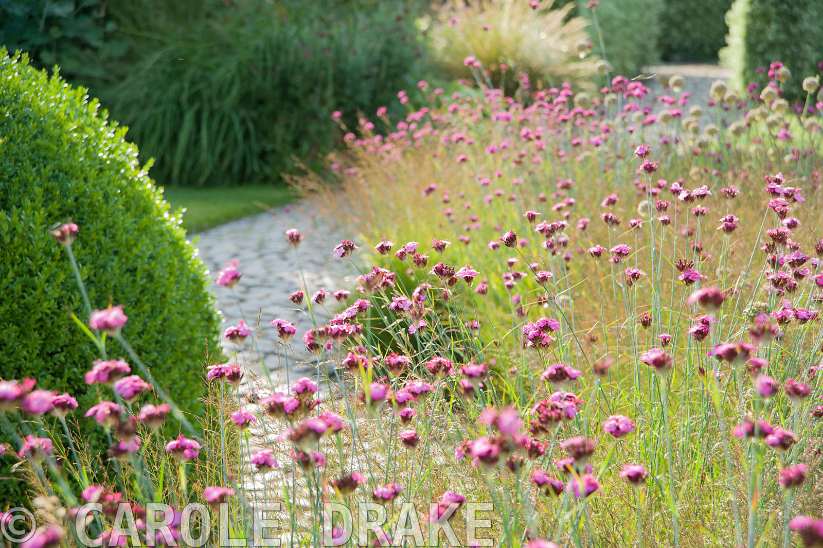 Carole drake the courtyard garden designed by piet for Gardening with grasses piet oudolf