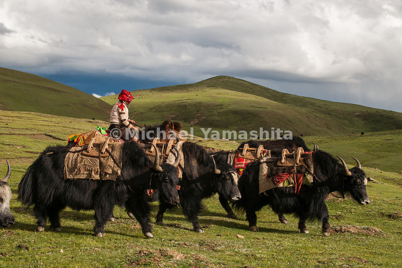 Segyagu,  meditation center with it's huge mani stone monument nearby Lhagong monastery. Nomads drive yaks...