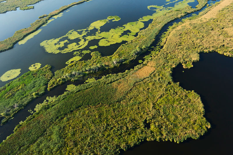 Aerial view over the Danube delta rewilding area, Romania, June 2012.