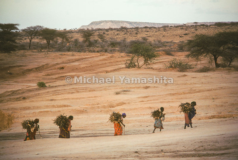 Group of girls carrying bundles of shrubs in Africa.