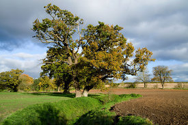 Countryside, Mathern near Chepstow, Monmouthshire, South Wales.