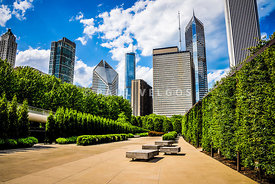 Picture of Chicago Skyline with Millennium Park Trees