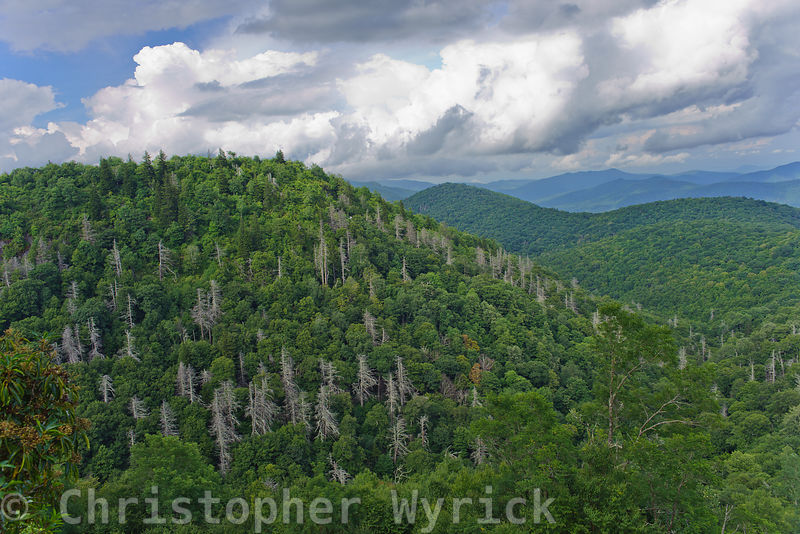 Pretty mountain top shot taken in the Blue Ridge Mountains of North Carolina.
