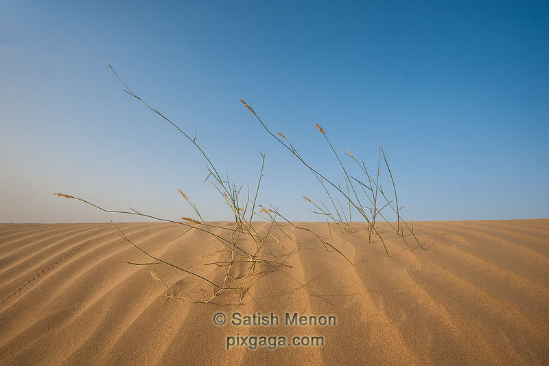 Sand Pattern and Desert Grass, Al Qudra Sand Dunes, Dubai, UAE