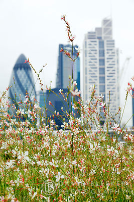 London City Roof Garden