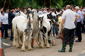 Horse dealers at Appleby horse Fair with horses to sell.