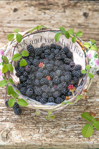 seek  and you shall find, blackberries in paper lined basket against rustic wood
