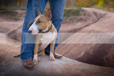dog looking away sitting at owners feet on red clay ridge