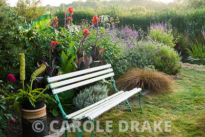 Bench in the wild garden surrounded by eucomis, cannas and clumps of carex, with pond byond. Crab Cottage, Shalfleet, Isle of Wight, UK