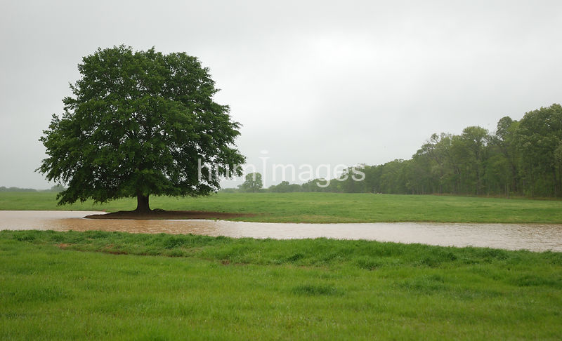 One large tree near a river left side of image