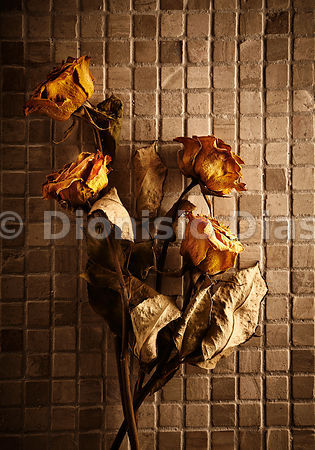 Dried roses with dramatic lighting.