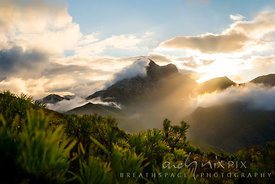 Clouds over mountains and mist in valley at sunrise, mimetes protea bushes in foreground
