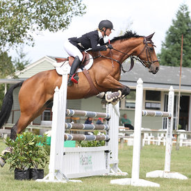 1.30m Horse Champ photos