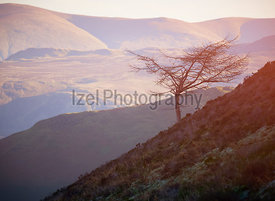 Warm sunlight creeping over a mountain ridge onto a lone bare tree on a slope of the Derwent Fells in the English Lake District, UK.