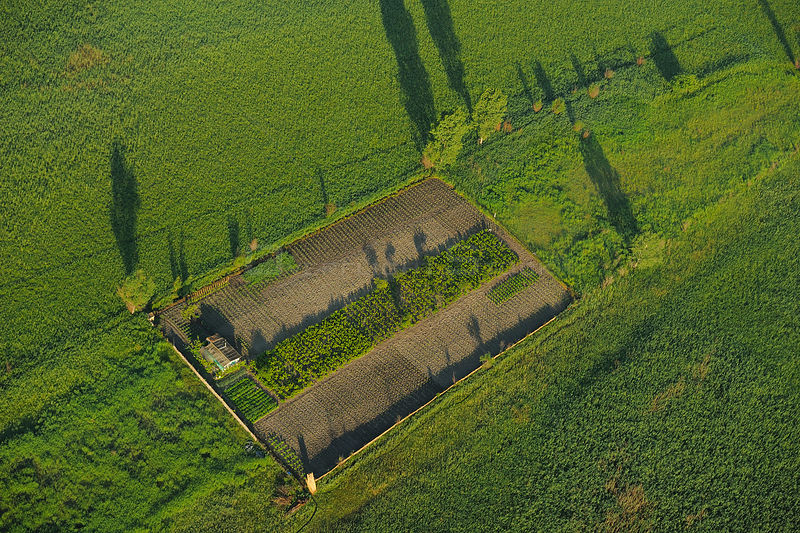 Aerial view of vegetable plot in Letea village, part of the Danube delta rewilding area, Romania, June 2012