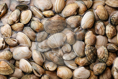 Raw fresh clams vongole seashells background close-up