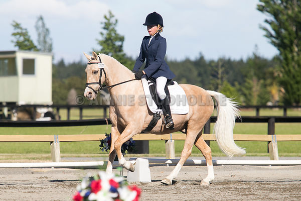 FEI World Dressage Challenge Christchurch photos