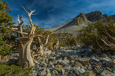 GREAT BASIN NATIONAL PARK photos