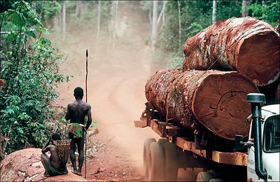 Deforestation in the forest of Lobaye territory of the Aka Pygmies, Republic of Central Africa. A logging truck and its cargo of sipos trunks