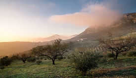 Winter afternoon in La Axarquia, Andalucia