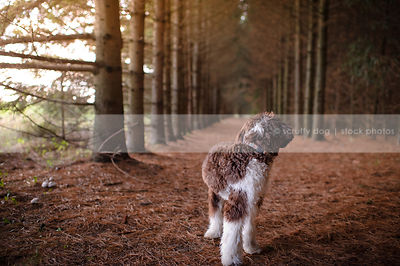 brown and white groomed dog looking away in tunnel of trees