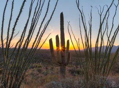 Saguaro National Park photos