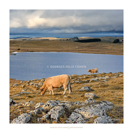 GFCOHEN - AUBRAC photos
