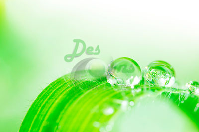 Water Droplets photos