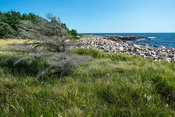 Neil_Harbor_Cape_Breton_Shore_Lined_COR_4381