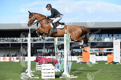 Bengtsson Rolf-Goran, (Swe) and OAK GROVE'S HEARTFELT
