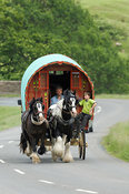 Horse drawn caravan on the road heading to Appleby horse fair. On A683 betwen Sedbergh and Kirkby Stephen.