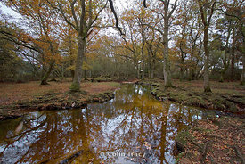 Autumn - Ober Water, New Forest