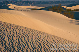 The Mesquite Sand Dunes