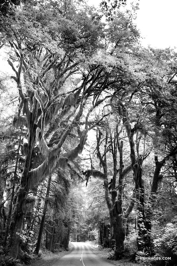ROAD TO HOH RAINFOREST OLYMPIC NATIONAL PARK WASHINGTON STATE BLACK AND WHITE