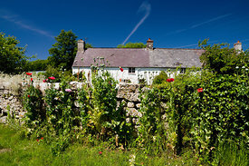 Cottages and Poppies, Merthyr Mawr, Bridgend, South Wales.
