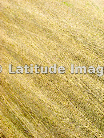 Textured Wheat Field After Harvesting, South Dakota