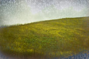 Deep Golden Hill of Grasses | Serene Landscape Photo