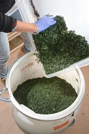 Production de spiruline