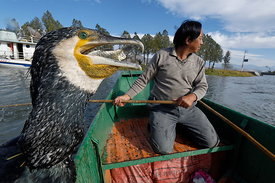 Cormorant_fishing