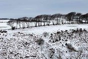 Tree line in winter near Simonsbath, Exmoor National Park