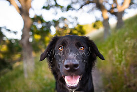 Happy-looking black dog smiling and looking at camera
