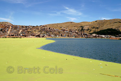 The banks of Lake Titicaca in Puno, Peru. Pollution from this rapidly growing city has fouled the shores, giving rise to a thick covering of algae.