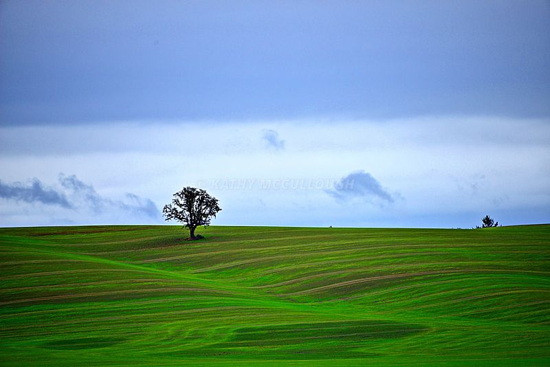 Green_tree_in_wheat_field_popped