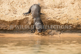 giant_otter_sand_slide-5