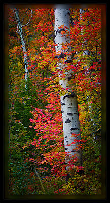 Aspen's and Maple