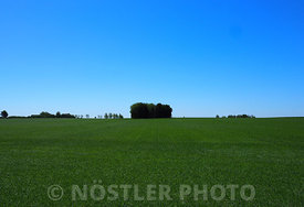 The fields are green