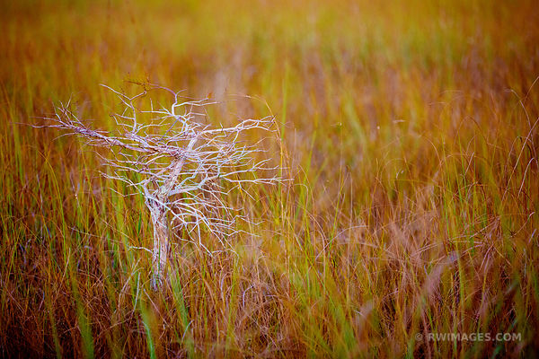 DWARF CYPRESS AND SAWGRASS PRAIRIE PA-HAY-OKEE OVERLOOK EVERGLADES NATIONAL PARK FLORIDA