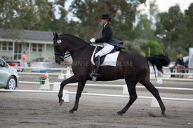 SI_Dressage_Champs_260114_010